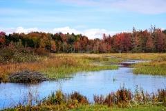 Beaver Pond + WM